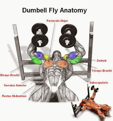 Dumbell Flyes Exercise