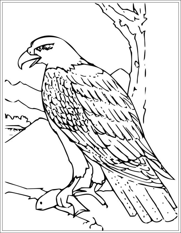 Ausmalbilder Adler - Ausmalbilder