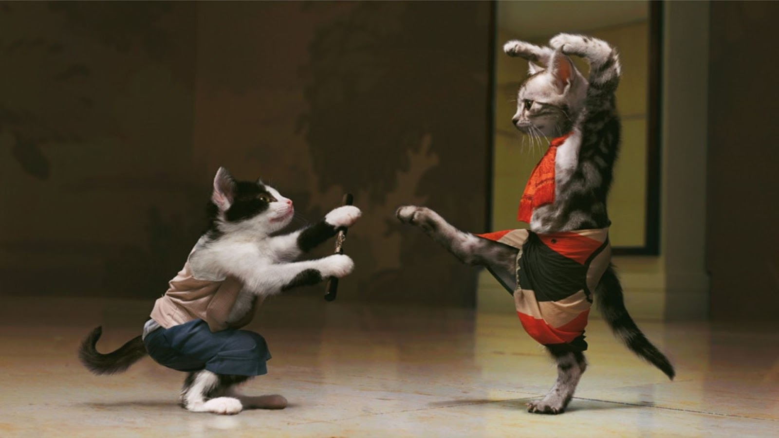 Funny animals fighting latest cute pictures funny for Gatti sfondi desktop gratis