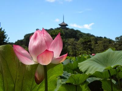احلى الصور الصباح, صور جميلة للزهور, صور ورد طبيعي، صور ورد وردي