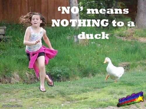 No Means Nothing To A Duck