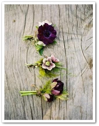 cousage lila, cousage vår, cousage anemon ranunkel tulpan