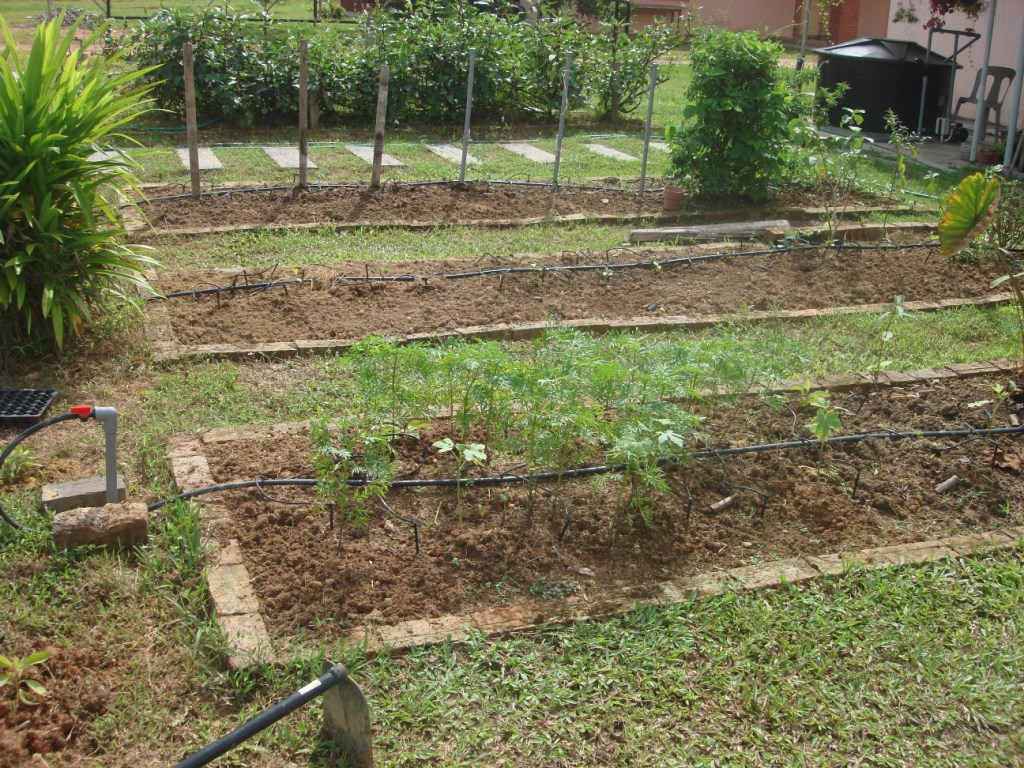 My little vegetable garden Garden Design and its outcome