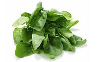 %CE%A3%CF%80%CE%B1%CE%BD%CE%AC%CE%BA%CE%B9 Aποξήρανση λαχανικών για ώρα ανάγκης και όχι μόνον!