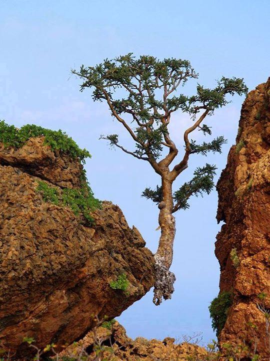 Pohon Besar di Batu
