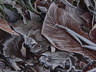 frost leaves in kelvingrove glasgow copyright kerry dexter