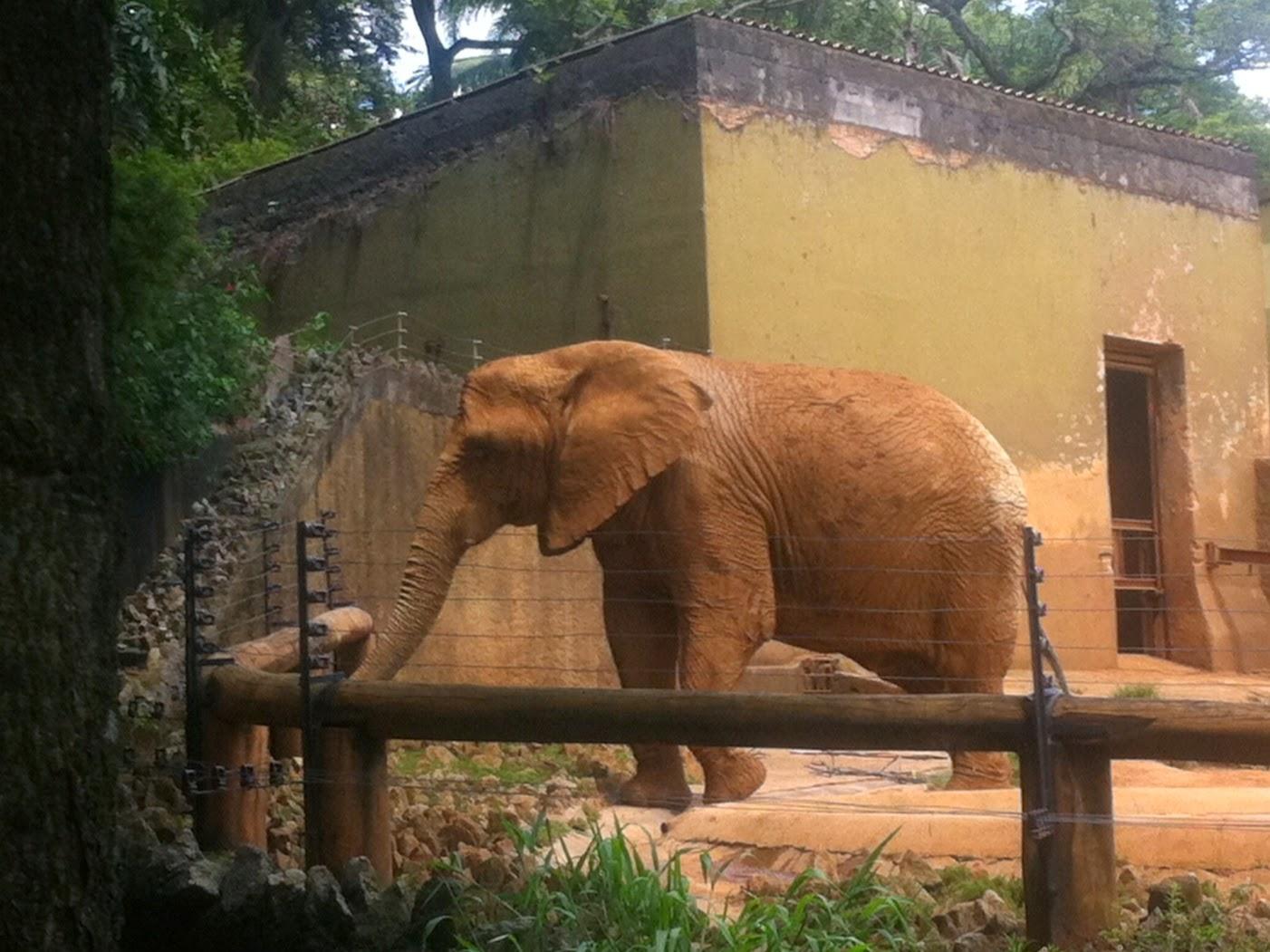 Descrição da Foto: Um elefante coberto de lama, sai de dentro de um pequeno lago. Ele está dentro de um espaço com cerca de madeira com vários arames. No fundo uma pequena casa na cor bege com uma porta aberta. Grama e árvores em volta.