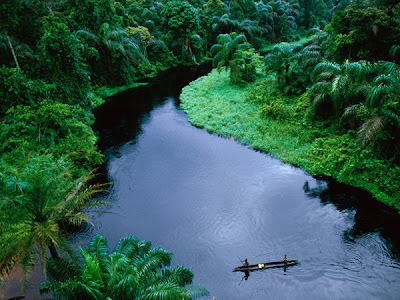 The congo jungle, dense and green