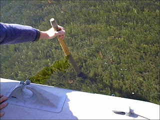 invasive aquatic weed hydrilla from boat solitude lake management sepro corporation