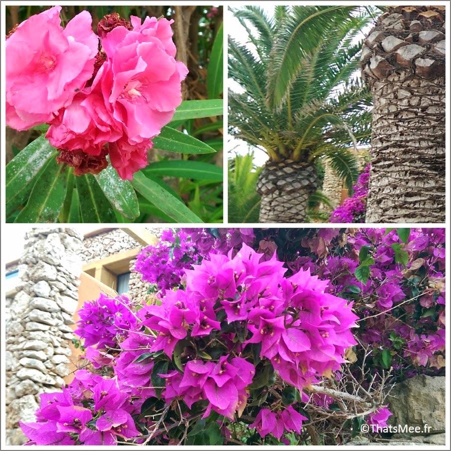 Menorca Minorque Baleares Espagne vacances fleurs flore faune