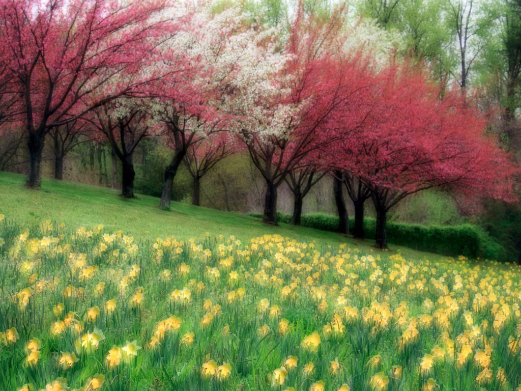 colorful trees scenery background | scenery backgrounds