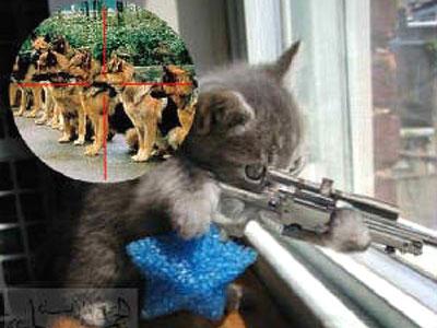 My Cat Story: Kucing Lucu