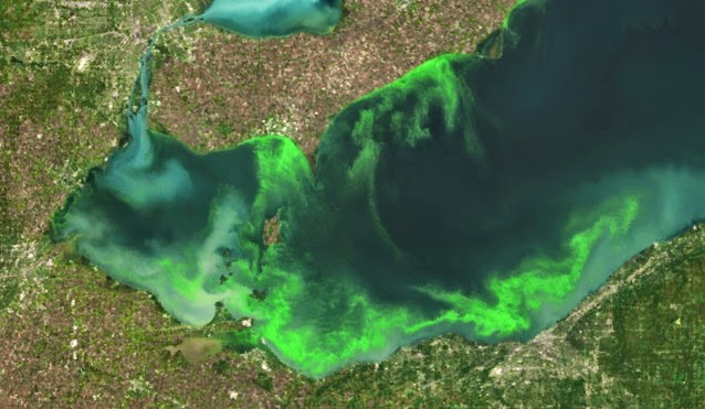 Satellite image of the algae bloom on Lake Erie in 2011 which according to NOAA, was the worst in decades. (Credit: NOAA) Click to enlarge.
