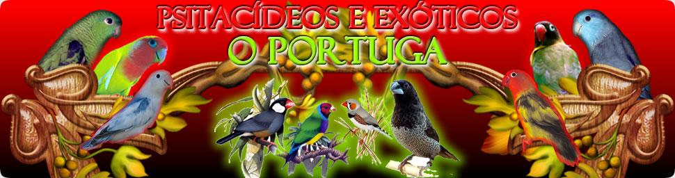 Psitacídeos O Portuga