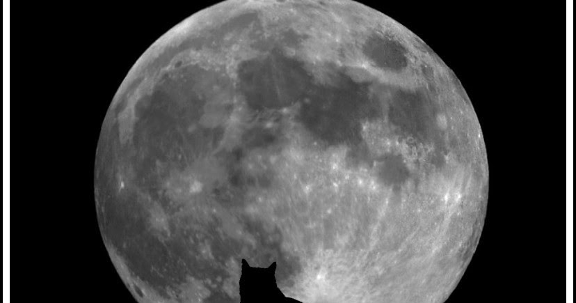 Fabulo le chat et la lune for Jardin et la lune