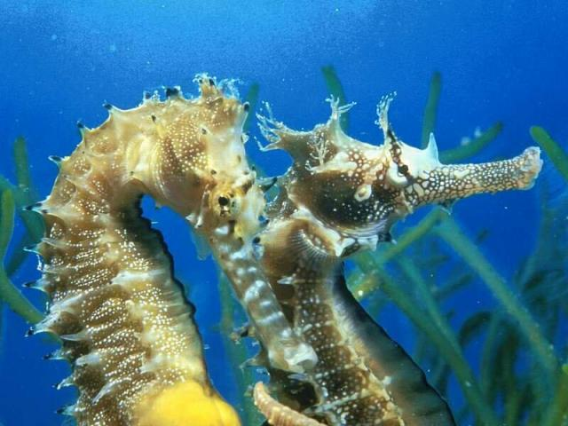 imagenes de peces de mar: