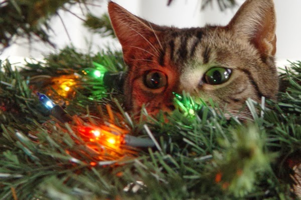 Cat in Christmas tree lights.