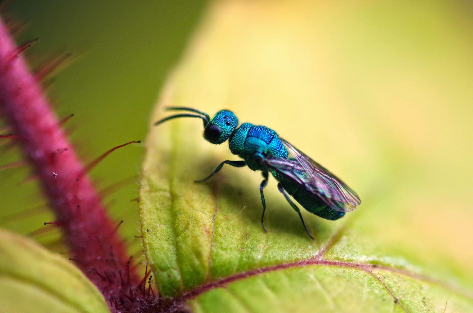 the bugs in the backyard september 2014