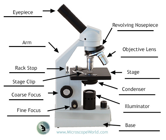 Answer sheet for labeling the parts of the microscope.