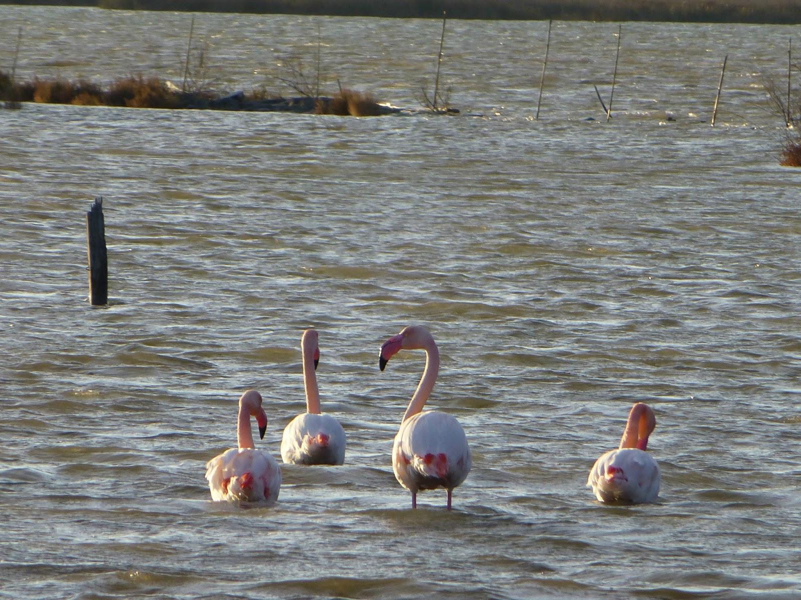 http://1.bp.blogspot.com/-97ytCVrBp60/UP0aHgj61DI/AAAAAAAAgsE/EVBHMwvqwEQ/s1600/flamingo1.jpg