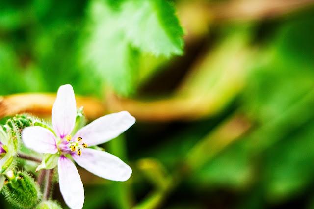 Fotografía macro de flores