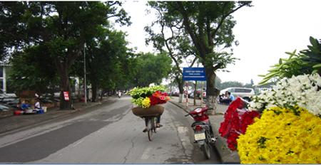 Hình ảnh hoa đẹp - Hoa loa kèn 15