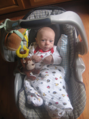 Swaddle Designs Picture 7