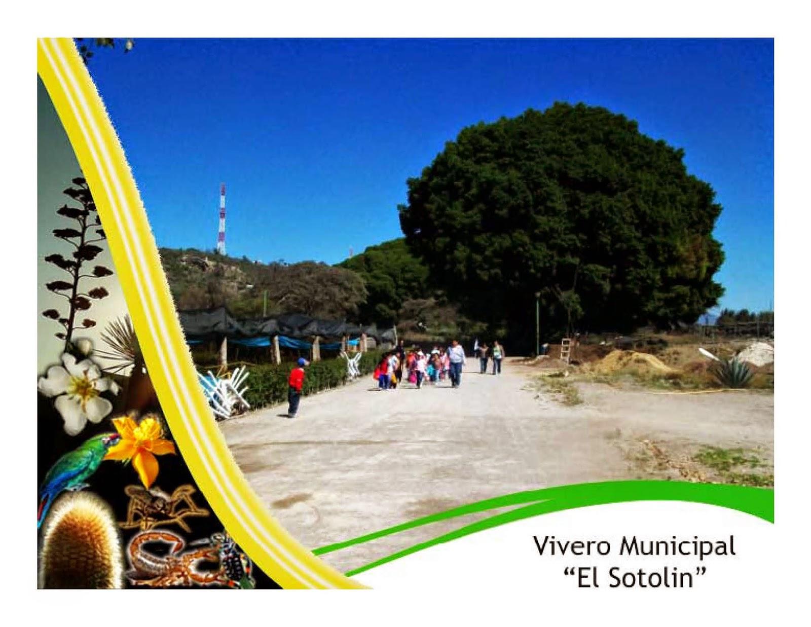 Tehuac n lugar de dioses vida verde en tehuac n vivero for Vivero municipal