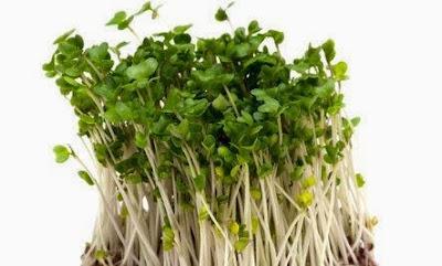 Kecambah Brokoli Dapat Menonaktifkan Gen Kanker