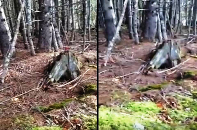 Breathing Earth – Forest ground moves in Nova Scotia, Canada  Breathing%2Bearth