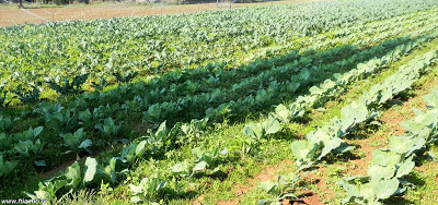 Ημερολόγιο σποράς και φυτέματος λαχανικών και εποχή συγκομιδής τους ανά μήνα