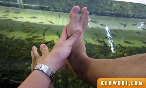 fish spa feet clean