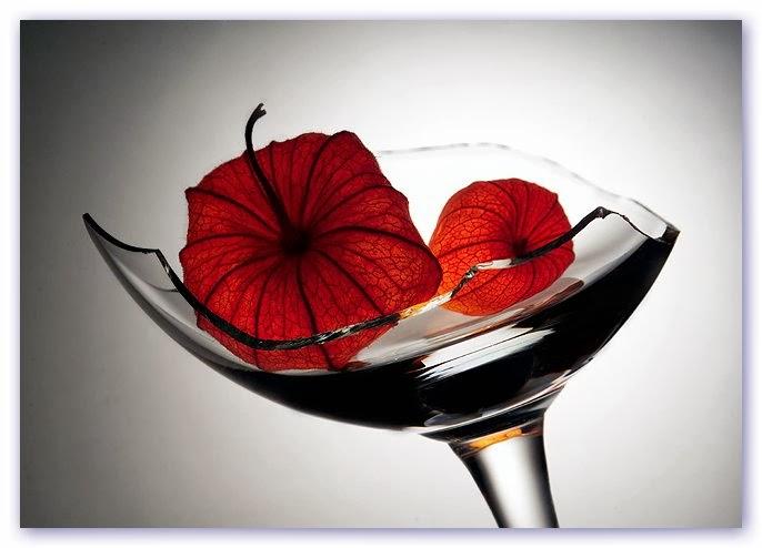Фото розы красные и белые