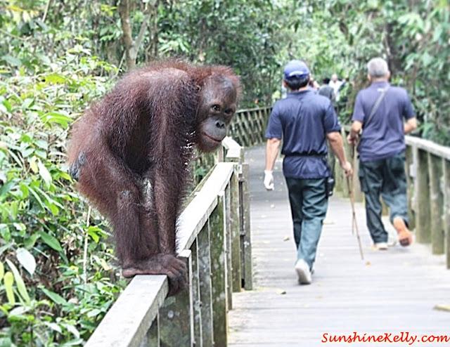 1 utama, Feed The Fish, Go Green Campaign, Bornean Sun Bear Conservation Centre, sandakan, kampung sim sim, Orang Utan Rehabilitation Centre,