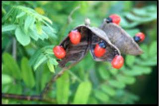 Pengertian dan Contoh Macam-Macam Gerak pada Tumbuhan