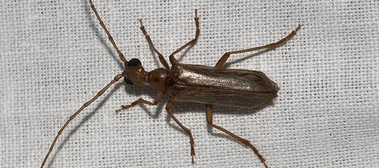 Boletín Sociedad Andaluza de Entomología Vol. 23