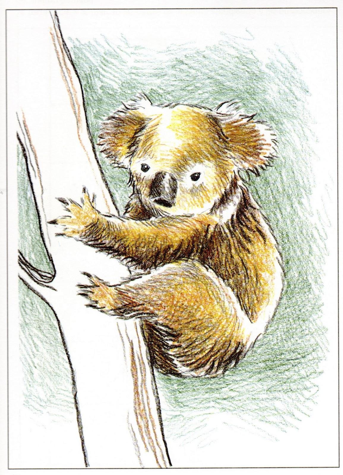 artenamorarte: Dibujamos animales
