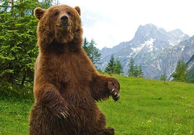 The free trees cacciatore di orsi - Immagini di orsi da colorare in ...