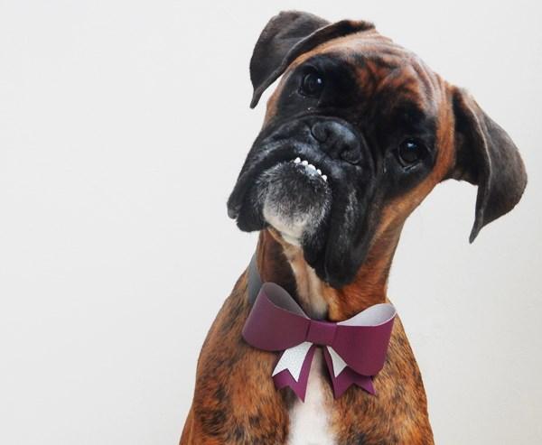 DIY : Collier de Noël pour chien