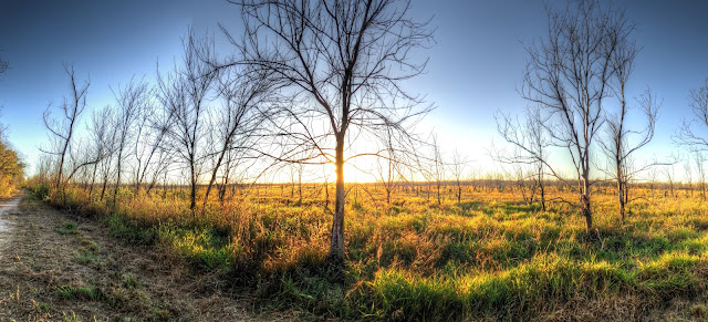 Just before sunset at a field in George Bush park - Houston, Texas - HDR - Panoramic