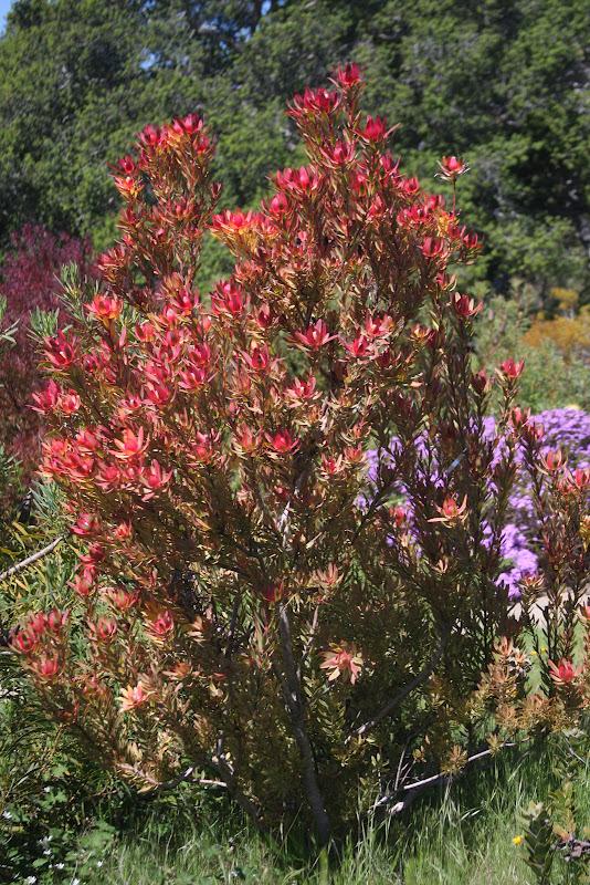 flora wonder blog california sunshine. Black Bedroom Furniture Sets. Home Design Ideas