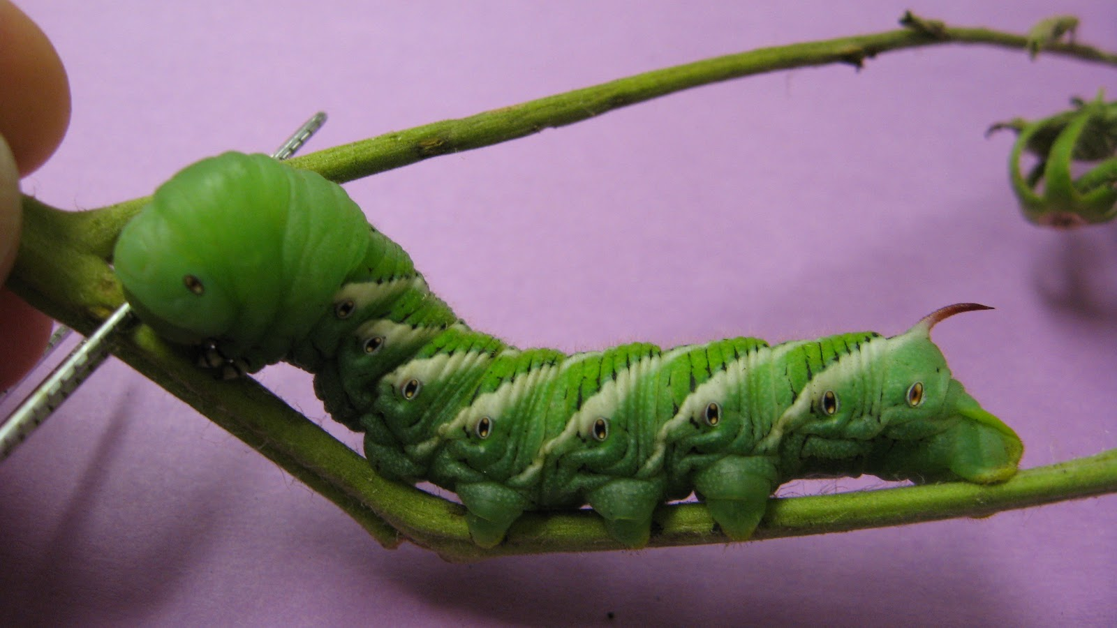 Climate Change And Caterpillars