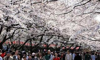 Tempat Wisata Di Tokyo - Taman Ueno - Ueno Park