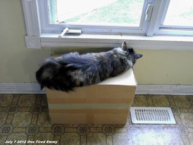 Emmy sleeping on her box