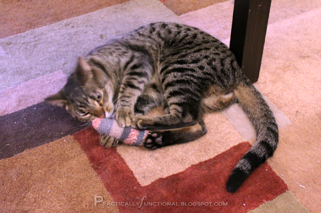 Finnegan wrestling with the bigger mouse