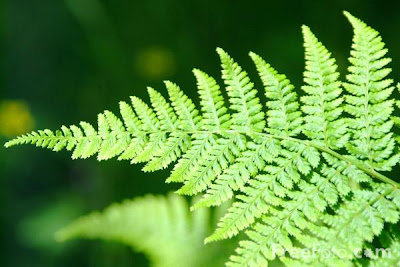 7 Fern %Category Photo