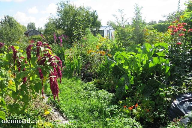 аленин сад, сентябрь,