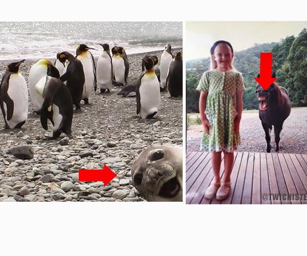 Los 19 Photobombs de animales más divertidos ( la #17 me encantó!)
