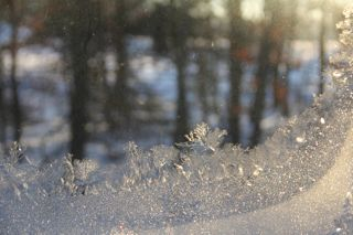 photo of frost crystals on window pane
