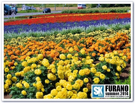 Furano Japan - Kanno Farm